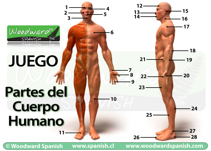 Parts Of The Body Spanish Vocabulary Game